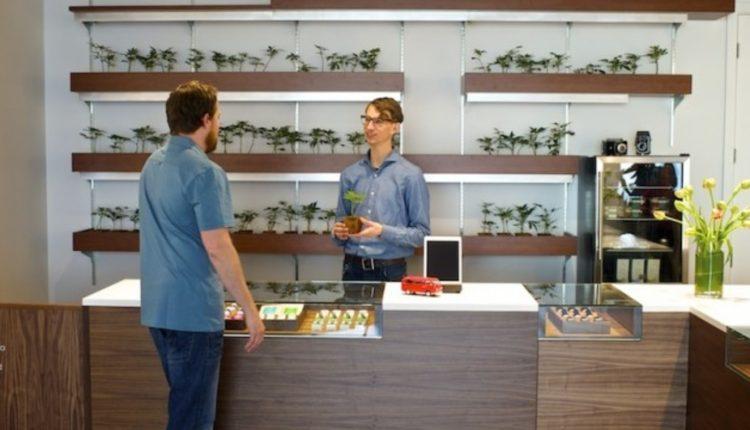 Medical Marijuana Dispensaries 2