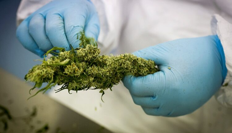 Medicinal Implications Of The Cannabis Strains